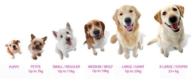 Nylabone Sizing Guide